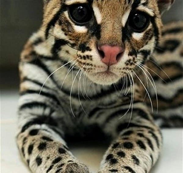 Purrfect Cat Breeds