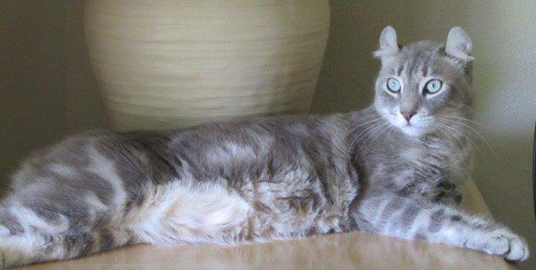 Highlander Cat 2