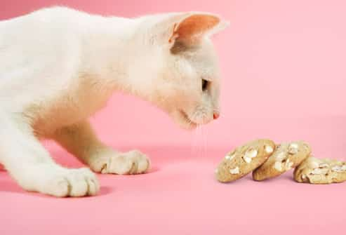 Foods Cats Shouldn T Eat