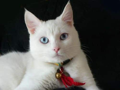 ojos azules personality