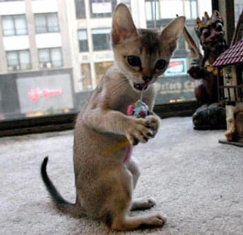 cat clinic greensboro