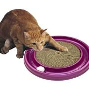 Ragdoll Cat Purrfect Cat Breeds