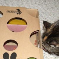 Cat-Amazing-Best-Cat-Toy-Ever-Interactive-Treat-Maze-Puzzle-Game-for-Cats-0-4