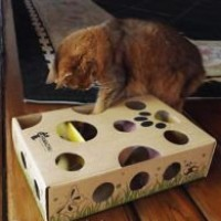 Cat-Amazing-Best-Cat-Toy-Ever-Interactive-Treat-Maze-Puzzle-Game-for-Cats-0-5
