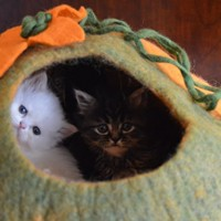 Cat-Cave-Bed-Handmade-Felted-Wool-House-for-Cats-and-Kittens-Original-Cat-Caves-By-Earthtone-Solutions-Radiant-Realm-0-1