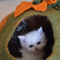 Cat-Cave-Bed-Handmade-Felted-Wool-House-for-Cats-and-Kittens-Original-Cat-Caves-By-Earthtone-Solutions-Radiant-Realm-0-3