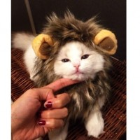 Dogloveit-Pet-Costume-Lion-Mane-Wig-for-Dog-Cat-Halloween-Dress-up-with-EarsPlease-be-aware-of-fake-products-from-other-sellers-0-0
