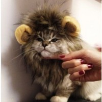 Dogloveit-Pet-Costume-Lion-Mane-Wig-for-Dog-Cat-Halloween-Dress-up-with-EarsPlease-be-aware-of-fake-products-from-other-sellers-0-1