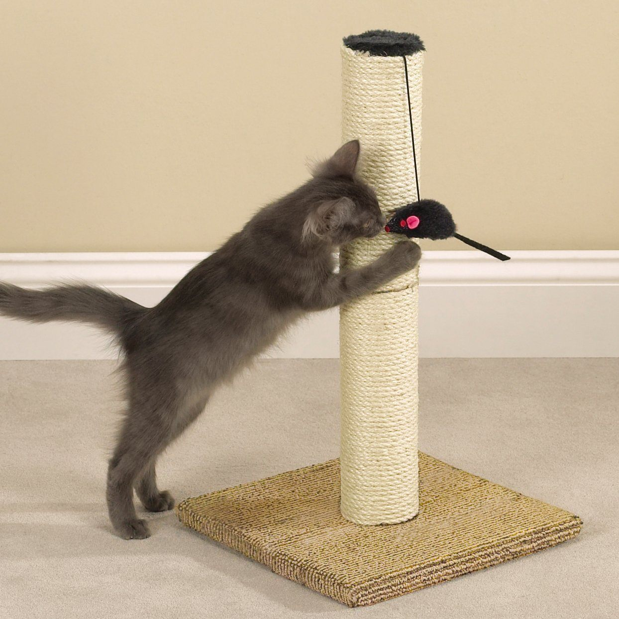 cat scratcher with toy