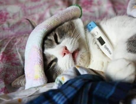 Can Cats Get Colds Yes And Here S What To Do If Your Cat