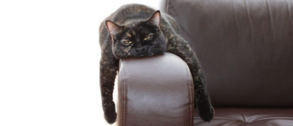7 Signs Of A Bored Cat And Clever Tricks To Entertain Your