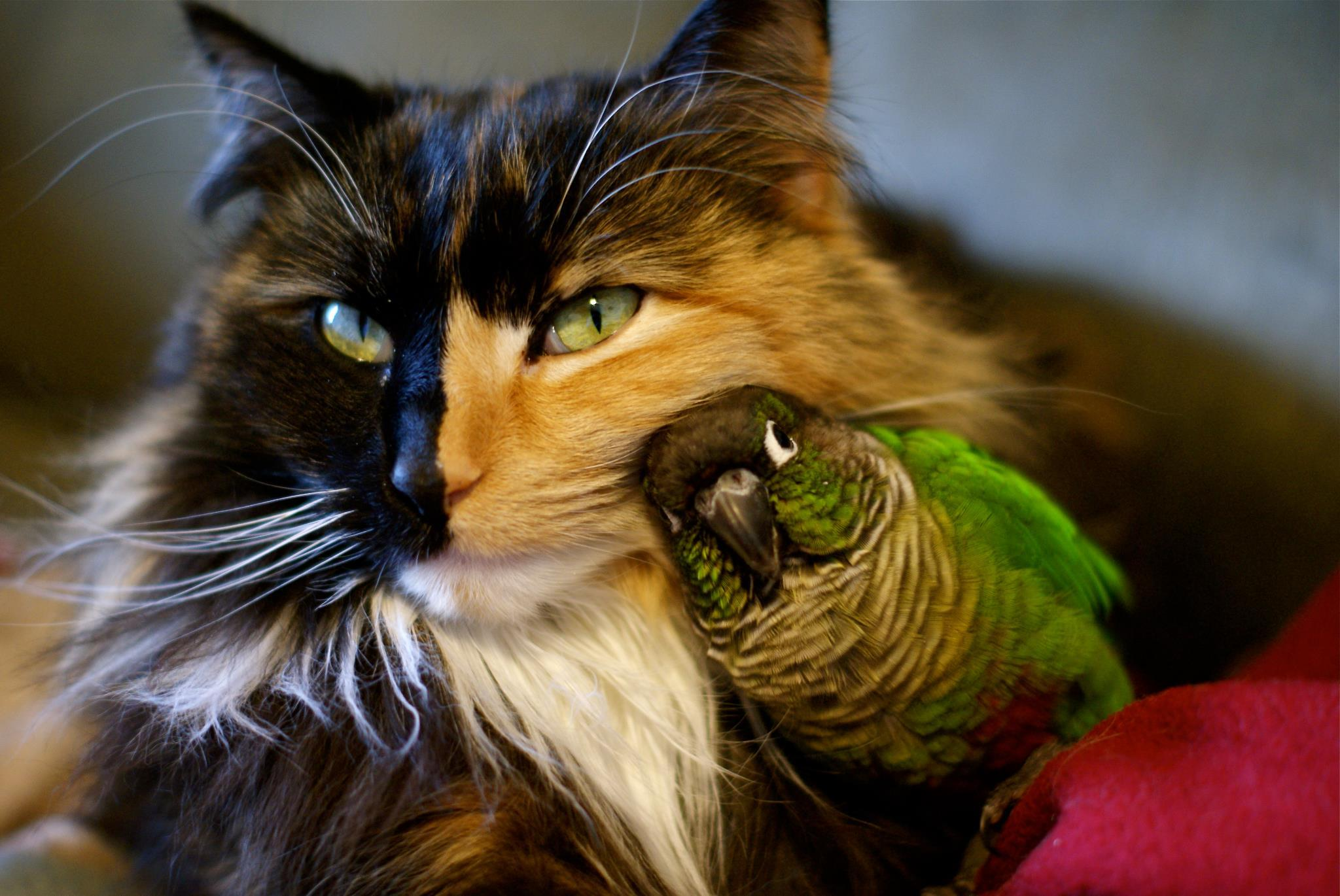 cat-and-bird