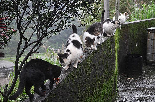 cat-destinations