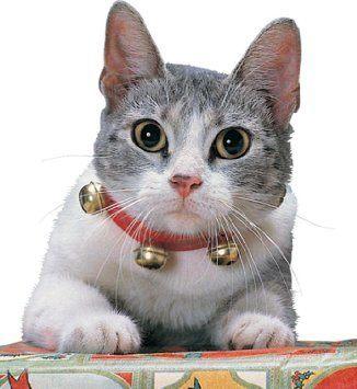 cat-laws
