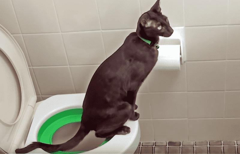 cat-toilet-training-system4