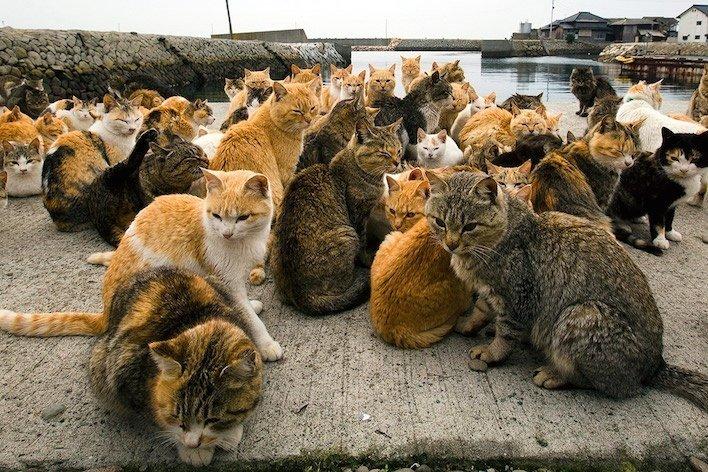 cat-tourism