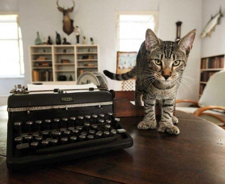 cat-travel-destinations