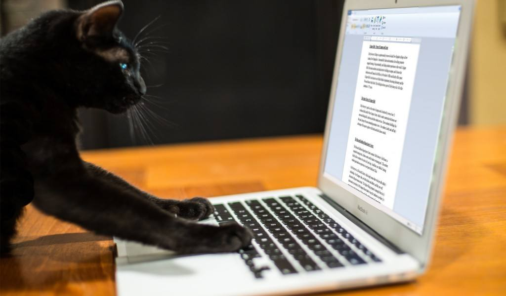 6 Funniest Cat Books Ever Written By A Cat Purrfect Cat