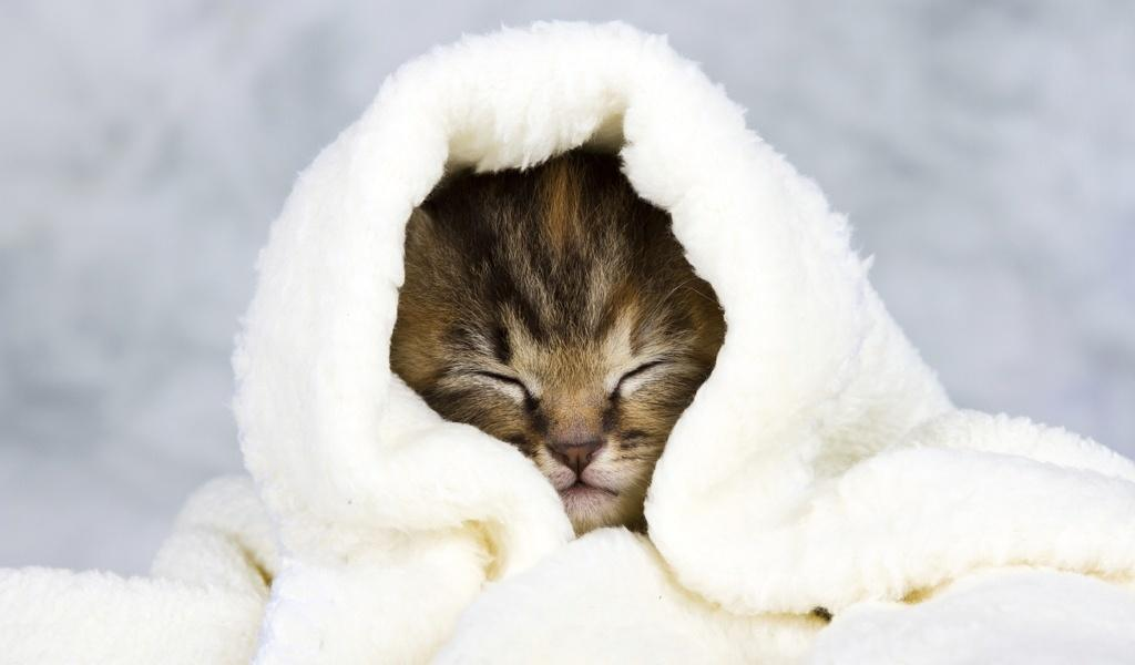 best home remedies for cat colds