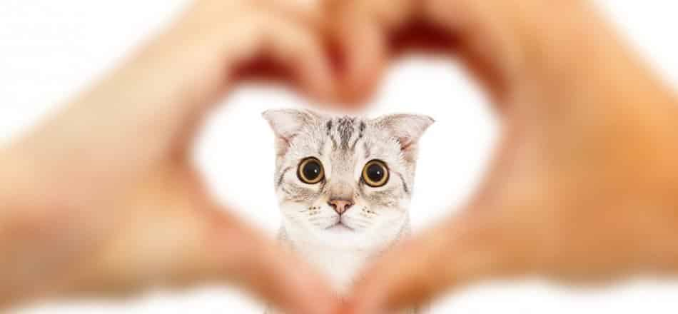 How To Make Your Cat Love You The Ultimate Guide
