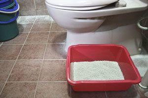 toilet training cats