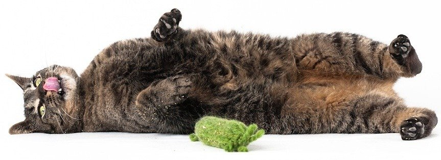 is-catnip-bad-for-cats
