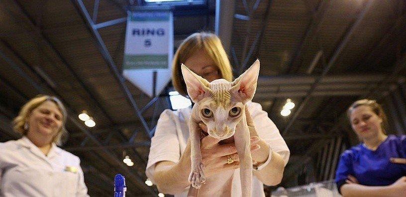 kitty-travel-destinations
