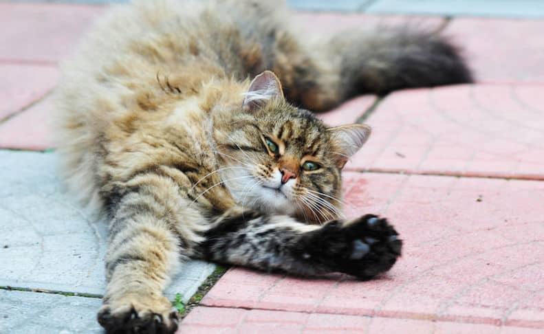 make-a-cat-purr
