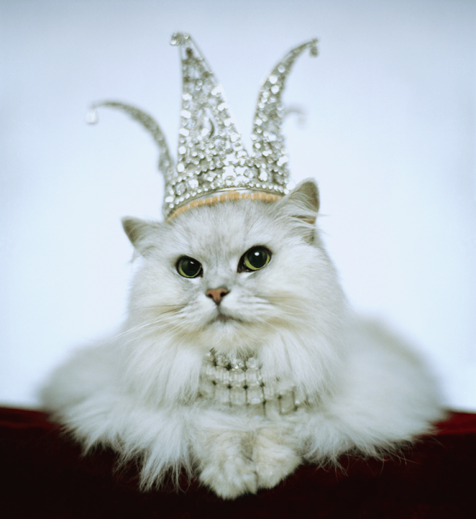 The Most Expensive Cat Breeds in the World – Purrfect Cat Breeds