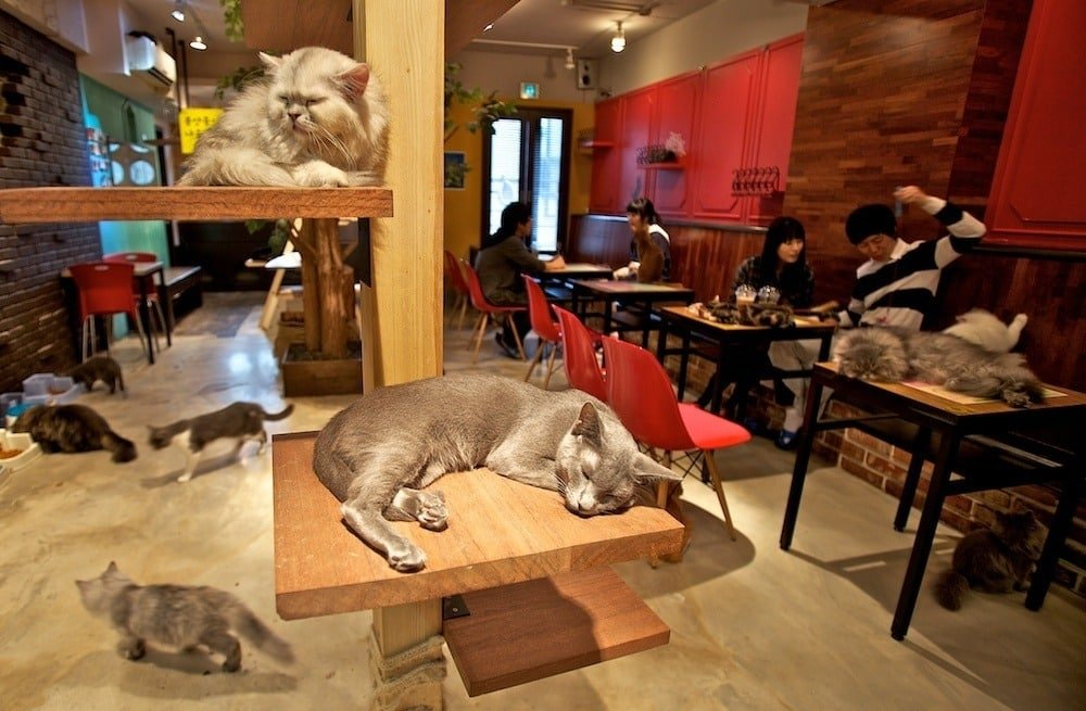 places-for-cat-lovers-to-visit