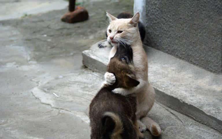strangest-cat-laws