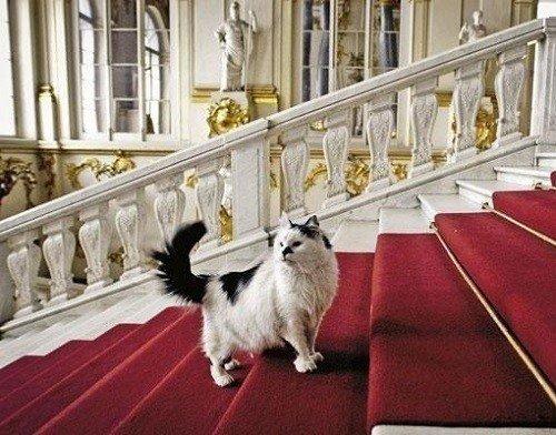 top-cat-destinations