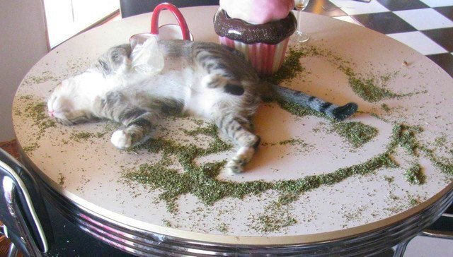 what-does-catnip-do-to-a-cat