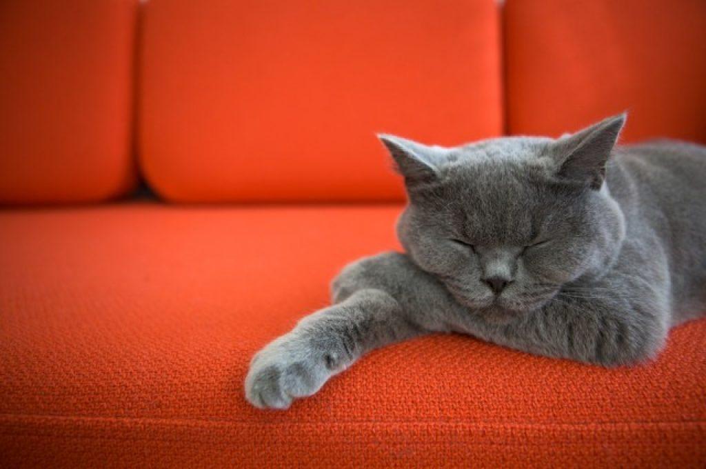 argus filch cat