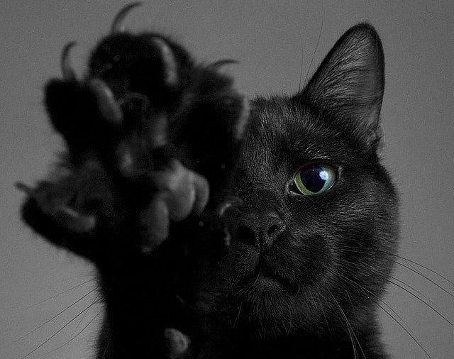 Картинки по запросу черной кошки