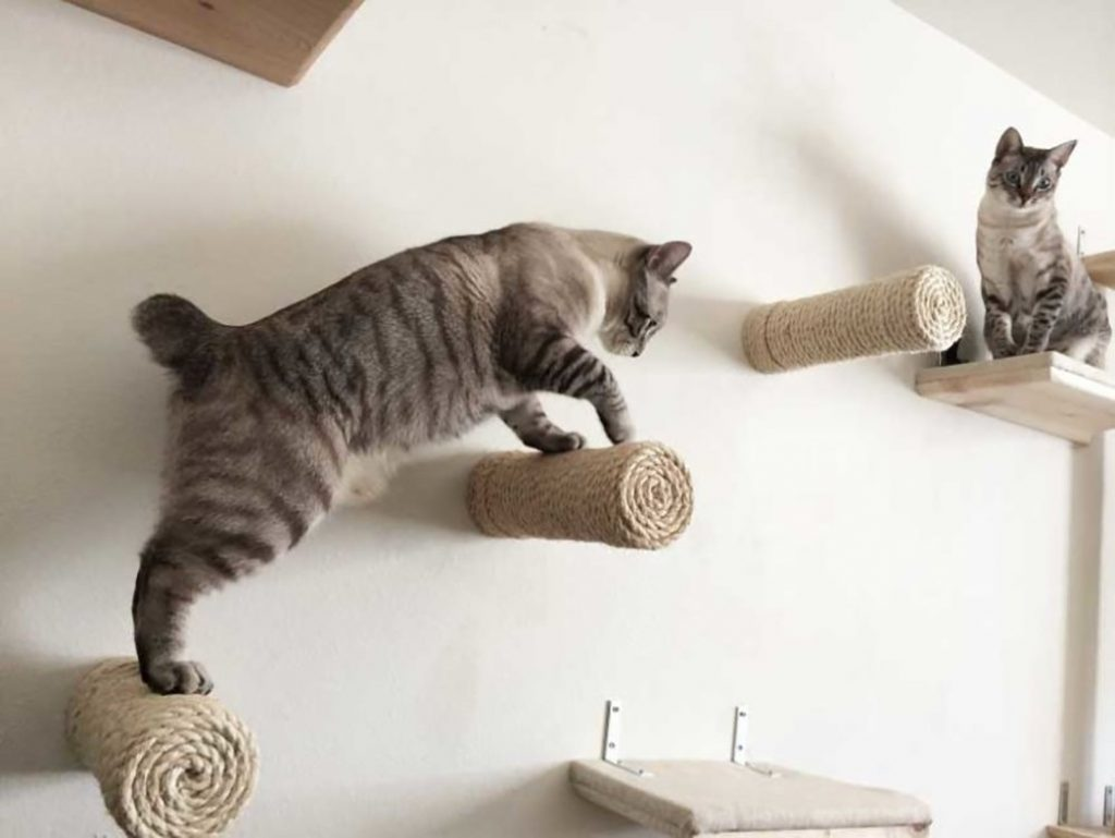 cool-cat-shelves
