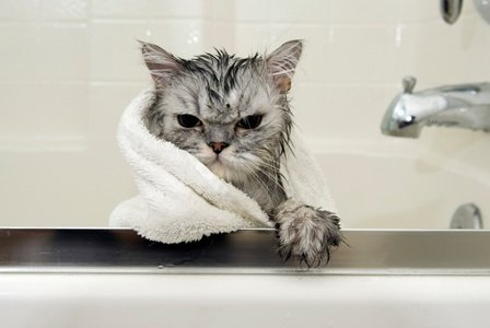 how to bathe cats