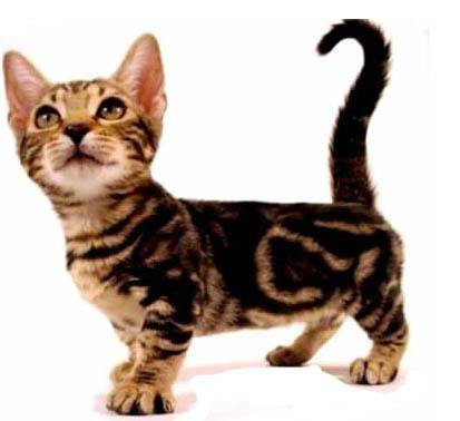 What Name Is Cat Short For