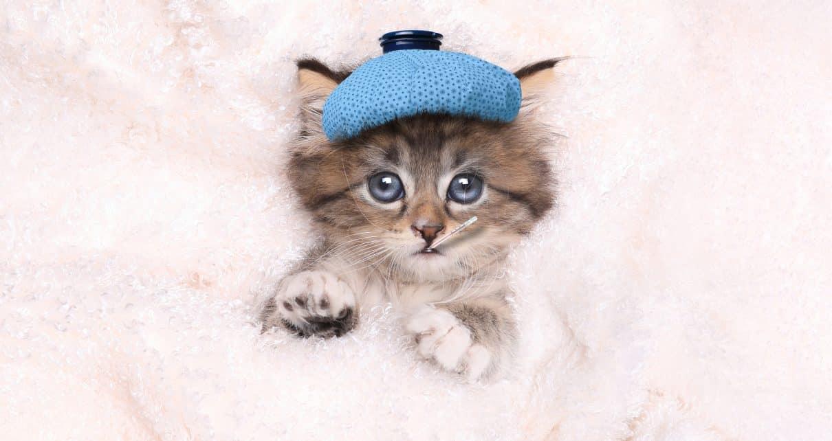 Cat feeling sick