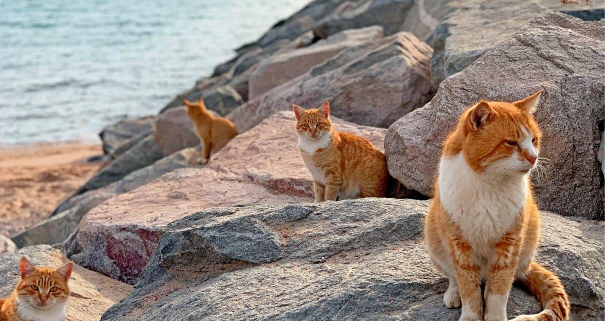 cat vacation destinations