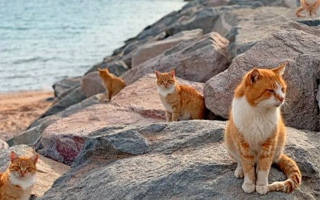 cat vacation destinations