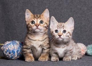 Two dwarf kittens