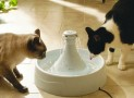 Everything You Need to Know to Choose the Best Cat Water Fountain