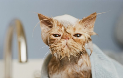 What's the Best Shampoo for Cats? 7 Purrfect Picks!