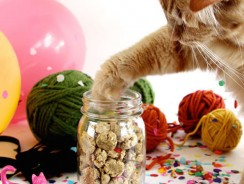 Top 10 Best Treats for Cats to Boost Everything from Mood to Dental Health