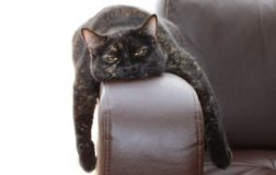 7 Signs of a Bored Cat and Clever Tricks to Entertain Your Cat
