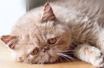 Can Cats Get Depressed? Signs and Treatment for a Sad Kitty