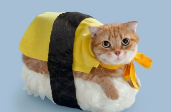10 Cat Halloween Costumes that are So Cute, They're Scary