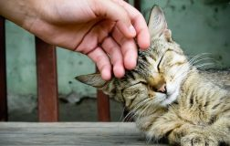8 Cat Purr Healing Benefits to Snuggle Up with Your Cat for