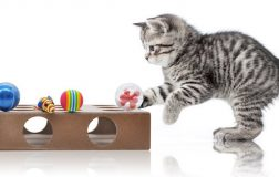 Top 6 Cat Puzzles for Clever Kitties